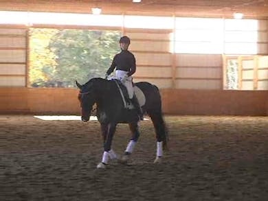 Intermediare II, I2, and Grand Prix, part 1 by Dressage Today Online
