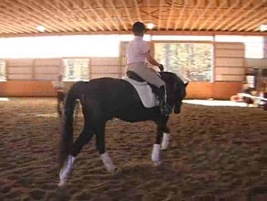 Young Horse Development and Young Horse Tests, part 3 by Dressage Today Online