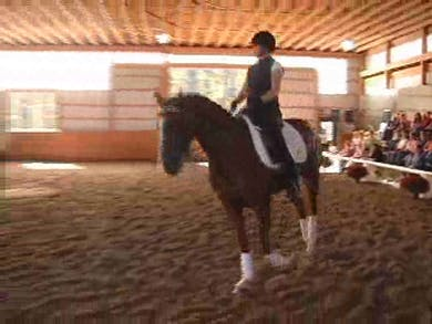Young Horse Development and Young Horse Tests, part 4 by Dressage Today Online