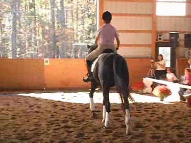 Young Horses-FEI classes or through the levels by Dressage Today Online