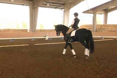Heather Robertson Day 1, responsiveness in the trot and shoulder in work.  by Dressage Today Online