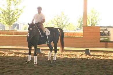 Jeremy Steinberg, part 3, day 1 by Dressage Today Online