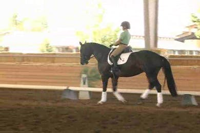 Taryn, part 1, day 1 by Dressage Today Online