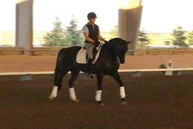Liz Hendrix, part 3, day 2, introducing the half steps and piaffe. by Dressage Today Online