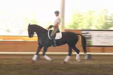 Jeremy Steinberg, part 2, day 2 by Dressage Today Online