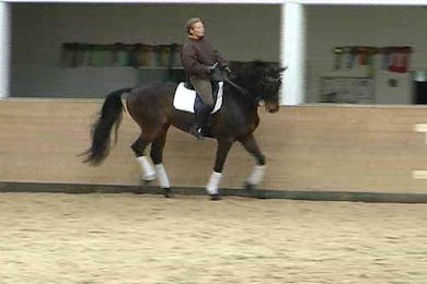 1/2 pass, flying changes, shoulder in and haunches in and exercises to prepare for the pirouettes.  by Dressage Today Online