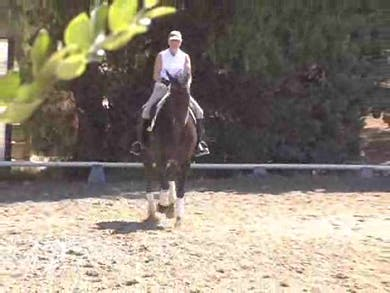 Work on walk and canter pirouettes. Then, Hilda with the student on board, works with the horse in hand with a whip for the hing leg sensitivity and a hollow bamboo stick for the front leg tapping, to develop the piaffe and passage. by Dressage Today Online