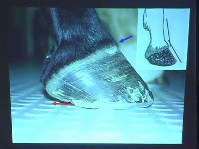 An in-depth look at hoof care by Dressage Today Online