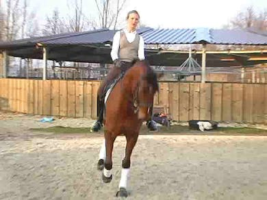 Donald qualified in 2007 for the Bundeschampionate with an 8.2. This piece focuses on basics and rideability. Katrin discusses the sensitivity to the bit this horse has and shows how they work through him sticking his nose in the air.  by Dressage Today Online