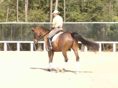 Developing the gaits, effect of the seat and leg on impulsion. What to expect within the transitions. by Dressage Today Online