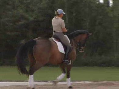 Proper preparation for the transitions. Proper use of seat and leg aids to ask the horse to move as you request by Dressage Today Online
