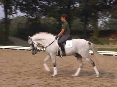 Warm up, use of low and deep, why it works and it's necessity with this horse. Establishing the basics, using the 1/2 pass to deal with tension by Dressage Today Online
