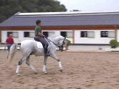Forward and back in canter 1/2 pass to create sensitivity to aids and brilliance, beginning passage work by Dressage Today Online