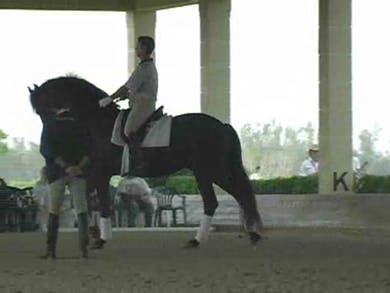 Part 2: Canter work getting the neck lower. Continued use of the lateral work to improve the engagment and connection into the hand. by Dressage Today Online
