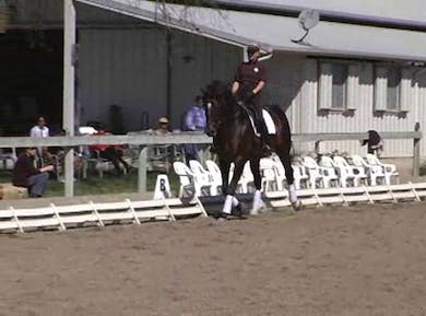 Weight carrying exercises, 1/2 steps, transitions within the gaits, 1/2 pass zigzag by Dressage Today Online