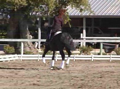 Suppling excercises, using the change of pace within the gaits, 1/2 pass, counter canter by Dressage Today Online