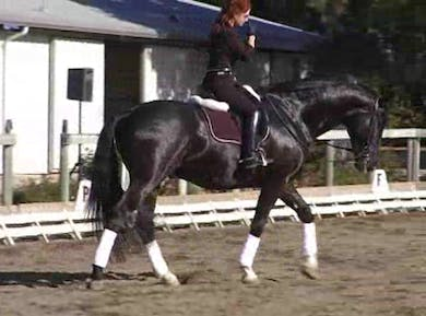 Walk pirouettes, excercises to increase collection, how to deal with anticipation with flying changes by Dressage Today Online