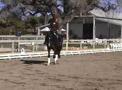 Work within the gaits by Dressage Today Online