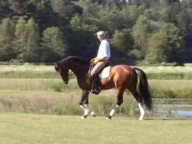 Warm up, walk, trot, canter, loosening, suppling, applicable to all by Dressage Today Online