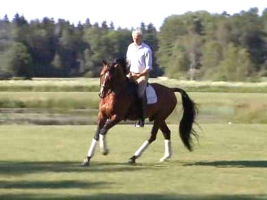 How not to overbend, correct flexion, riding straight, transitions by Dressage Today Online