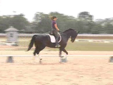 Chrissa warms this horse up, getting him used to his show surroundings, focusing on creating lightness and suppleness. by Dressage Today Online