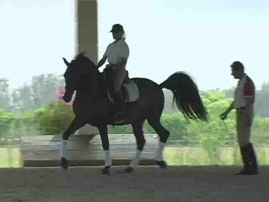 Piaffe, lateral work, tempi changes by Dressage Today Online