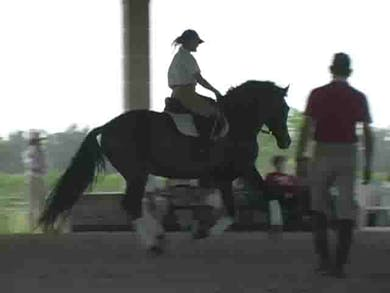 Endings of the tempi work, cool down by Dressage Today Online