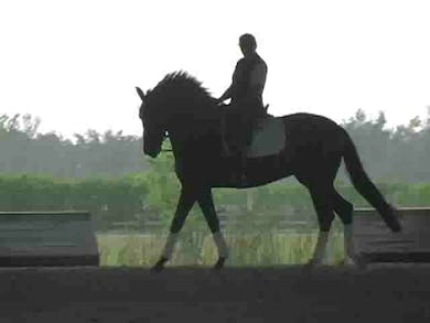 Lateral work in walk and canter by Dressage Today Online