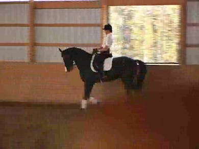 Continued review of training scale and basic training with Steffen and Janet. by Dressage Today Online
