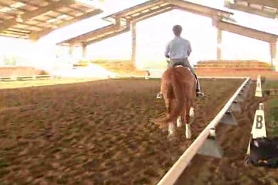 Michael Etherly, part 1, day 1, Michael takes the horse a little too deep, but Jan explains the reasoning. They work on the flying changes and then after he relaxes they move to the tempis. A discussion ensues about the mental framework of the horse.  by Dressage Today Online