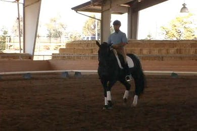 Dirk Glitz riding, focus on trot work. Medium level.  by Dressage Today Online