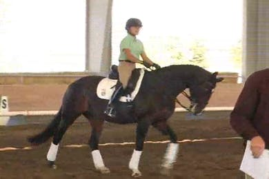 Taryn, part 3, day 2, shoulder in, half pass by Dressage Today Online