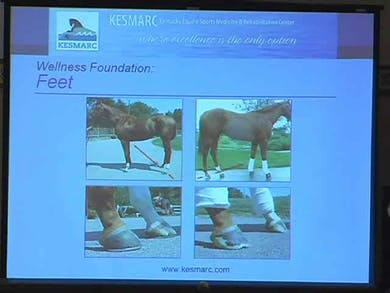 Complete rehab and preventative care for the equine athlete by Dressage Today Online