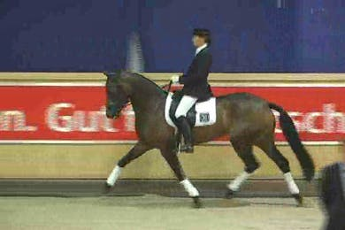 Sale horses by Dressage Today Online
