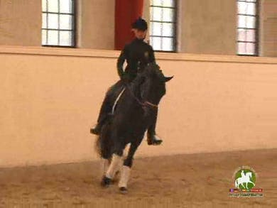 Nice soft transitions forward and back are demonstrated on this horse as part of his warm up routine. Jan discusses his theory on timing of the introduction of the flying change. by Dressage Today Online