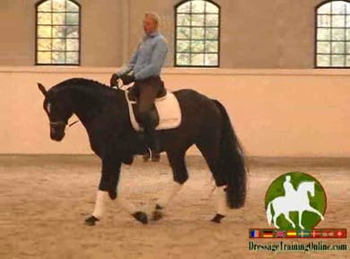 Jan discusses the importance of keeping the hind legs in the footprint of the front legs, always within the same track. Jan moves into straightness and then lateral work is introduced, yet always remembering to focus on awareness of where your horses legs by Dressage Today Online