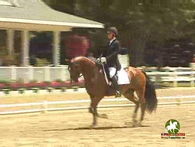 George Williams riding Sir Velo, 7.6, 7.4, 7.6, 7.6, 7.8   76% by Dressage Today Online
