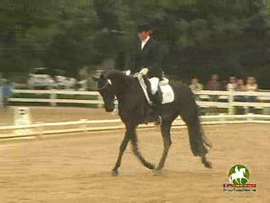 Petra Warlimont riding Romantico SF, 7.0, 8.0, 7.3, 6.4, 7.2   71.8% by Dressage Today Online