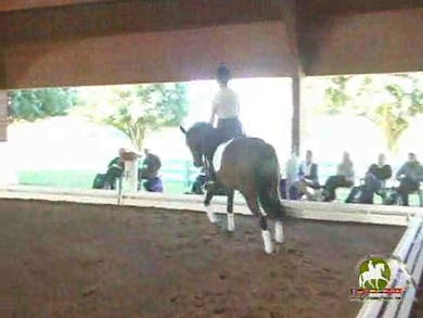 Jennifer Baumert, part 2, day 1,  by Dressage Today Online