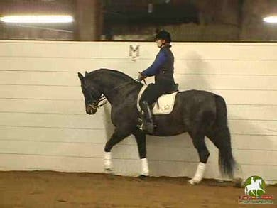 Walk work, Alex explains the importance of what to do when your horse is leaning on the bit, they move onto piaffe mentioning the imprortance of rider and trainer stopping the movement rather than the horse . Also mentioning the proper use of the spur aid by Dressage Today Online