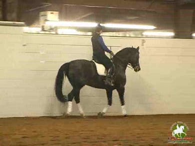 Passage work. Alex talks about the use of the aids while asking for the passage, seat, hand, position and the importance of giving...Canter work, getting a horse from deficiant hind end activity to workable hind end activity and tempi changes. The changes by Dressage Today Online