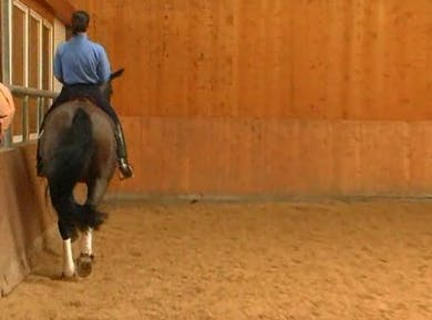 Pirouettes and Elasticity by Dressage Today Online
