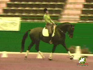 Claire Darnell continues working on the gaits and keeping the rhythm, with Jan.  by Dressage Today Online