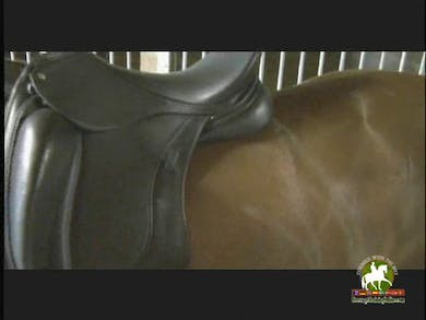 Continuation of proper saddle fit. by Dressage Today Online