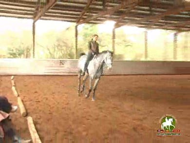 Counter canter work.  by Dressage Today Online