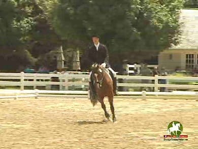 Patrick Tompkins riding Born in the USA GCF, 7.2, 7.4, 7.2, 7.0, 7.2   72% by Dressage Today Online
