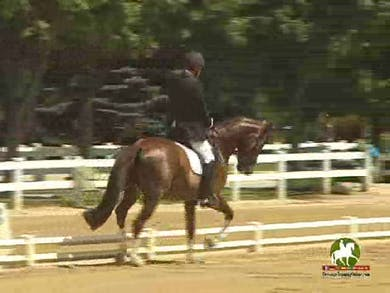 Mark Carter riding Bellino, 8.0, 7.2, 8.0, 7.5, 8.0   77.4% by Dressage Today Online