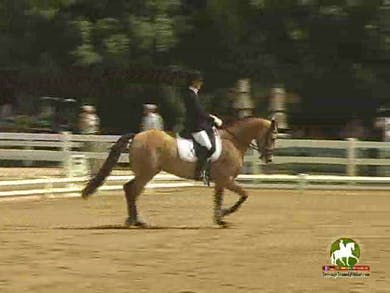 Bonnie Canter riding Fancy This GCF, 7.0, 7.0, 6.8, 7.0, 7.0   69.6% by Dressage Today Online