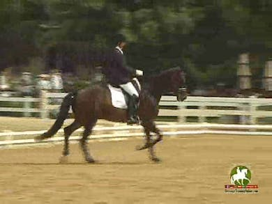 Jennifer Schrader-Williams riding HS Wrevolution, 7.2, 7.5, 7.2, 7.0, 7.2   72.2% by Dressage Today Online