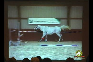 Continuation, first horse shown receives 8.5 trot, 8 balance, 6.5 walk, 7.5 canter, 75 points overall. by Dressage Today Online